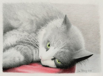Drawing demo of Bella the cat
